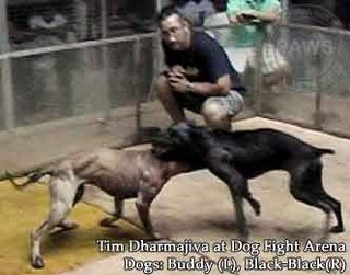Timothy Dharmajiva Wanted for Dogfighting
